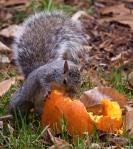 squirrel (1 of1)-2