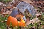 squirrel (1 of1)